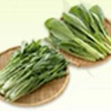 まいにちが旬!茨城県産みず菜・こまつ菜の簡単レシピをご紹介♪