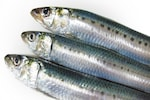 いわし(鰯 イワシ)は、日本の食卓の代表魚です。マイワシ、ウルメイワシ、カタクチイワシがよく食べられるいわしです。いわしの稚魚や幼魚は、ちりめんじゃこになります。いわしは、焼いたり、煮たり、揚げたりと料理法も多彩な魚です。煮物の場合は、みそ煮や梅干し煮が定番です。生でのいわしは、刺身、カルパッチョ、なめろう、ぬた、酢じめなどにしていただきます。いわしは旨味が強いため、煮干しにもされます。また、いわしは洋風にも合うため、オリーブオイル焼き、ムニエルなどのソテーにしたり、マリネ、フライのような調理法も人気です。