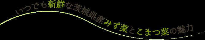 いつでも新鮮な茨城県産みず菜とこまつ菜の魅力