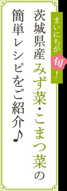茨城県産みず菜・こまつ菜の簡単レシピをご紹介