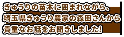 きゅうりの苗木に囲まれながら、埼玉県きゅうり農家の森田さんから貴重なお話をお聞きしました!