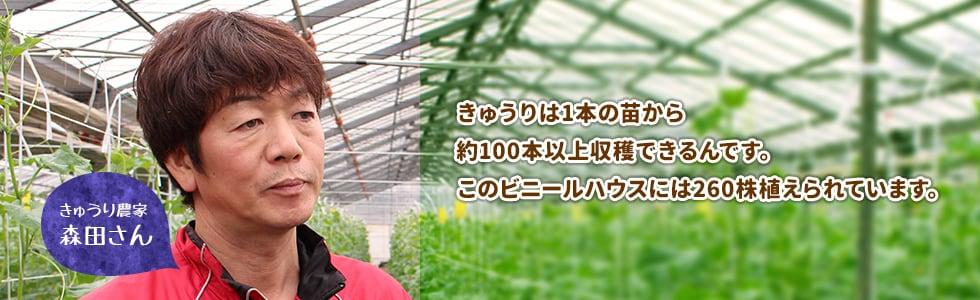 きゅうりは1本の苗から約100本以上収穫できるんです。このビニールハウスには260株植えられています。