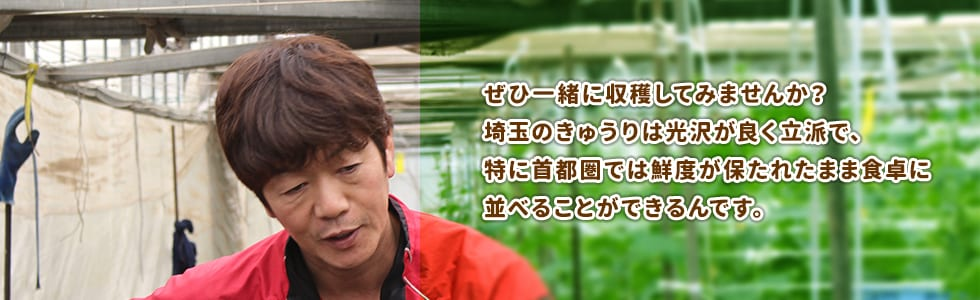 ぜひ一緒に収穫してみませんか?埼玉のきゅうりは光沢が良く立派で、特に首都圏では鮮度が保たれたまま食卓に並べることができるんです。