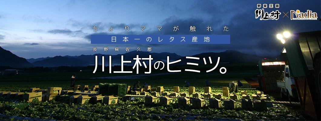 ちょりママが触れた!日本一のレタス産地、川上村のヒミツ。野菜王国 川上村 × レシピサイト「ナディア / Nadia」