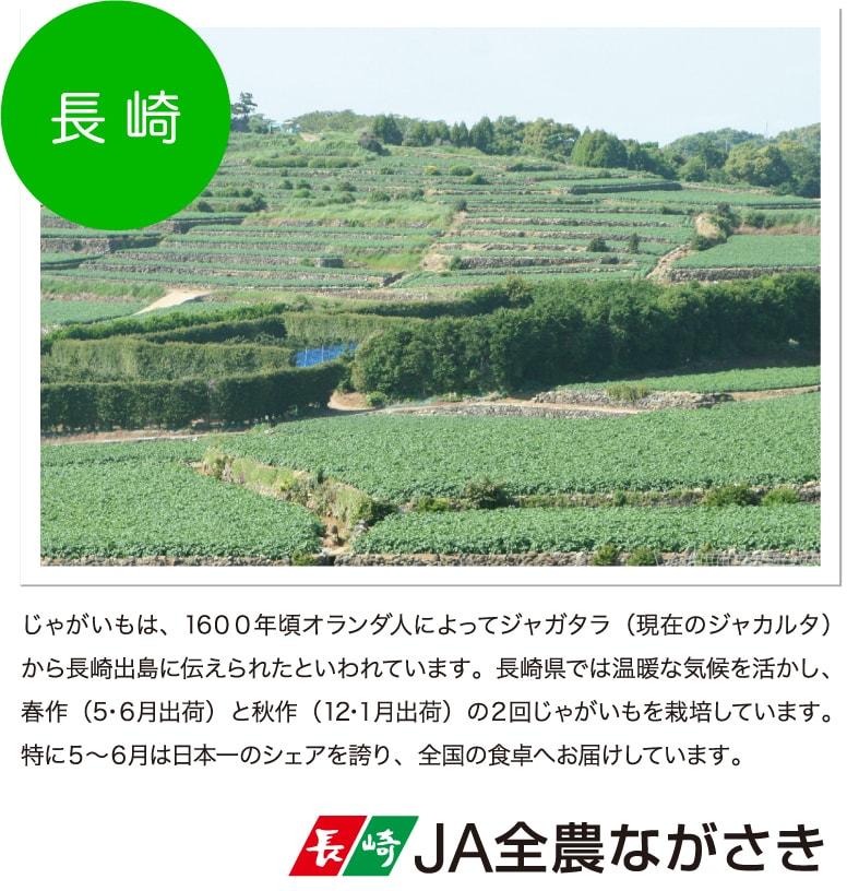 じゃがいもは、1600年頃オランダ人によってジャガタラ(現在のジャカルタ)から長崎出島に伝えられたといわれています。長崎県では温暖な気候を活かし、春作(5・6月出荷)と秋作(12・1月出荷)の2回じゃがいもを栽培しています。特に5〜6月は日本一のシェアを誇り、全国の食卓へお届けしています。 JA全農ながさき