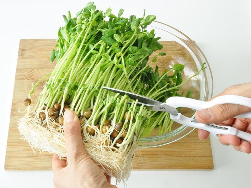 豆苗の魅力【1】調理がとにかく簡単!