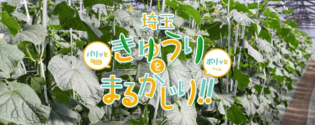埼玉きゅうりをまるかじり!!