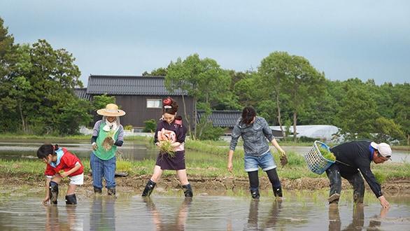 画像:田植え・生きもの調査の様子