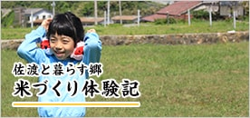 「朱鷺と暮らす郷」米づくり体験記