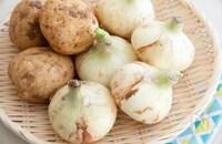 「春野菜って、けっきょく何?」に管理栄養士がお答えします!