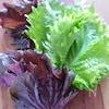 美肌にハトムギ、デトックスには冬瓜。初夏におすすめの薬膳食材