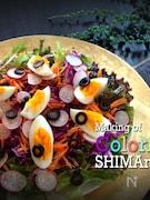 カラフルサラダ Dish No.001 7colors