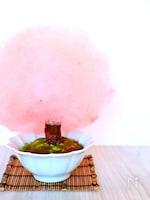 【春スイーツ】桜わたあめの作り方レシピ