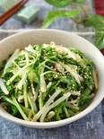 茹でて美味しい♡水菜ともやしのやみつきサラダ