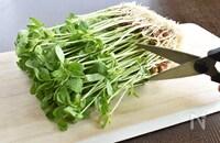 炒め物やスープにも!超節約食材「豆苗」の使いこなしレシピ