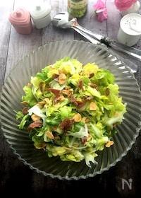 『やみつきなおいしさ!春キャベツと新玉ねぎのシンプルサラダ』