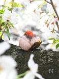 「いちご桜餅」(食紅・道明寺は不要!)
