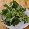 ネバネバ系野菜の新星 モロヘイヤを食べてキレイになろう!