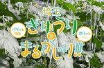 埼玉産きゅうりの魅力をまるかじり♡おいしいきゅうりレシピ10選!