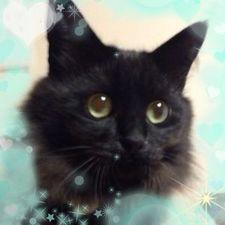黒ネコのしっぽ