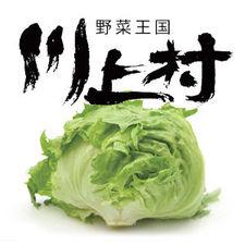 川上村レタス